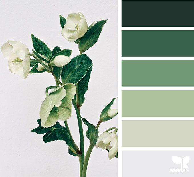 פלטת צבעים ירוקה